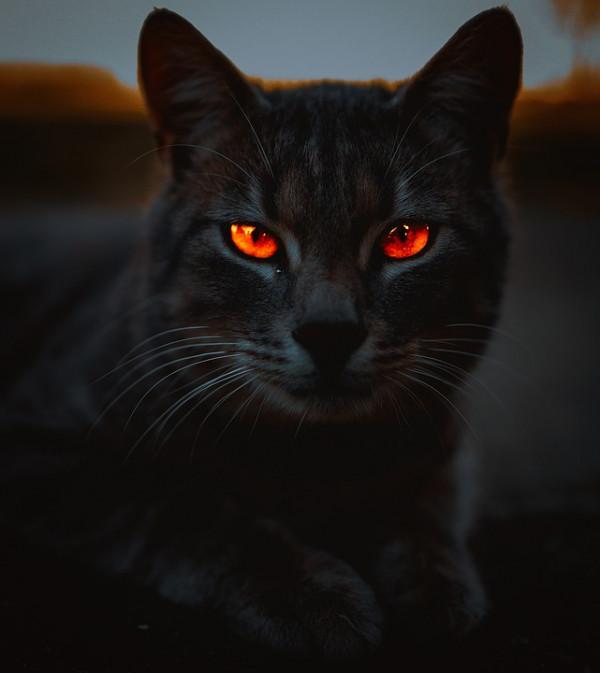 Divergencia 2 - El gato negro, de Edgar Allan Poe - Audiolibro